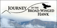 Journey of the Broad-Winged Hawk