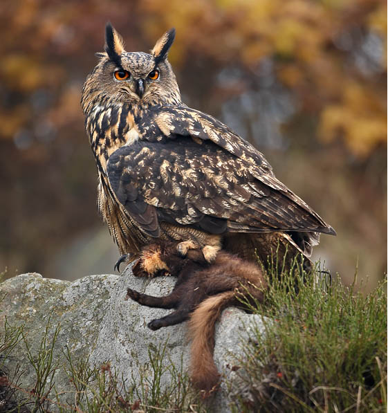 big chompy bird hunting quick guide