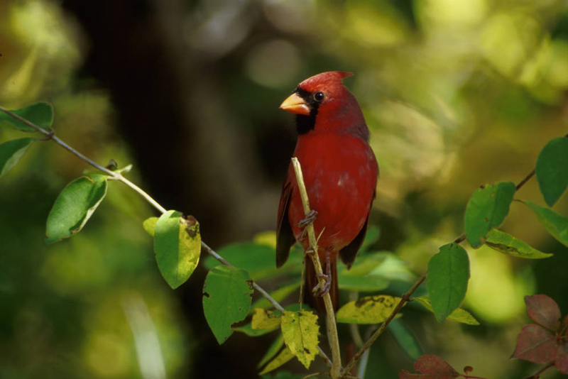 Animals that live in the deciduous forest - photo#23