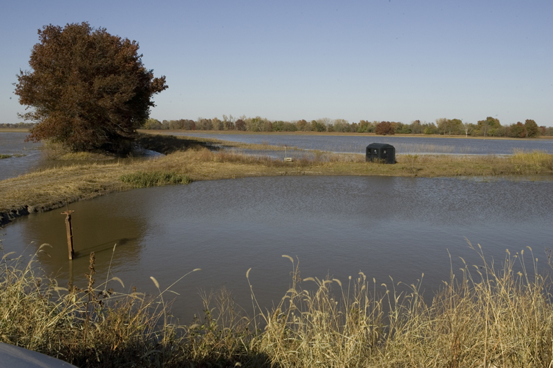 Ponds natureworks for Duck pond water
